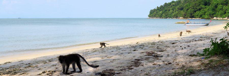 monkeybeach2